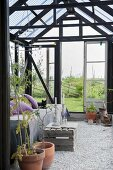 Furniture, plant pots, couch and wooden crate on gravel floor in greenhouse