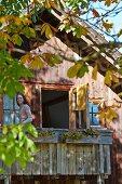 Frau auf dem Giebelbalkon eines Holzhauses, herbstlich gefärbte Blätter eines Kastanienbaumes im Vordergrund