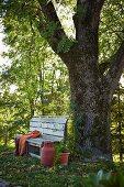 Einfache Holzbank und alte, rot gestrichene Milchkanne vor mächtigem Eschenstamm