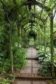 Stone path with steps leading through climber-covered, green wooden tunnel arbour; vintage ambiance