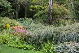 Ornamental grass and Przewalski's golden ray in herbaceous border in idyllic garden