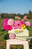 Dahlias of various colours in painted metal container on footstool outdoors