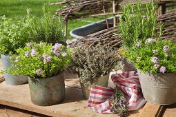 Various herbs in vintage containers on table outdoors