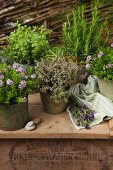 Various herbs in vintage containers on surface outdoors