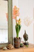 Apricotfarbene Hyazinthe in rostigem Metallbecher, Buddhakopf und Steinen vor Shabby-Spiegelrahmen