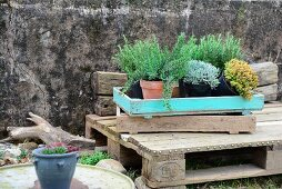Verschiedene Kräutertöpfe in alten Pflanzkisten auf rustikaler Holzpalette vor Steinmauer