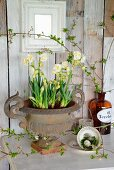 Vintage-style Easter arrangement of narcissus in urn, vintage coffee cup, moss and egg