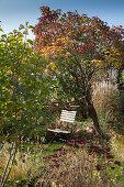 Garden chair under tree in autumnal garden
