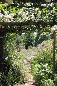White climbing rose on pergola over narrow garden path
