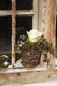 Weiße Rose und Efeu in einem mit Wachs beträufelten Blumentopf