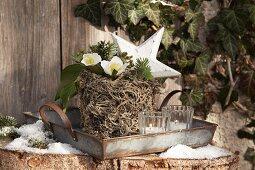 Mit Flechten verzierter Blumentopf in einem Blechtablett
