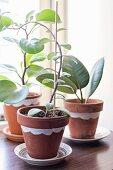 Houseplants in painted terracotta pots