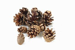Various pine and fir cones