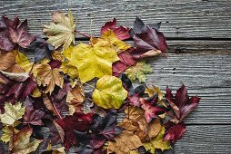 Brightly coloured autumnal leaves lying on wooden boards