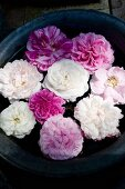 Pink and white roses floating in plant pot