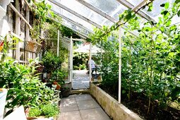 Plants in raised beds in greenhouse with view of terrace in background