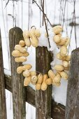 Wreath of peanuts on snowy garden fence