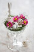 Speckled eggs and primulas in Easter next in glass bowl