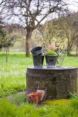 Vintage zinc planters and branches of fruit blossom on concrete plinth in garden