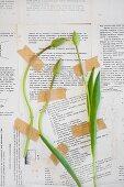 Tulpenknospen kleben auf einer mit bedruckten Seiten tapezierten Wand