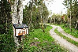 Geschwungener Waldweg mit dekorativem Briefkasten in Häuschenform an Birkenstamm