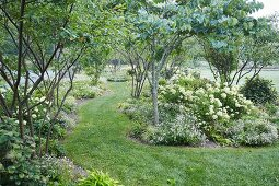 A spacious garden with groups of plants