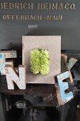 Einband mit grünen Nelken dekoriert, umgeben von Vintage Buchstaben