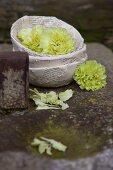Grüne Nelken in Blumenschalen aus alten Buchseiten