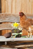 Hen next to Easter arrangement of moss, twigs and narcissus