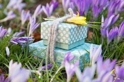 Geschenkschachteln mit Filzschnur und gelber Krokusblüte zwischen lila Krokussen