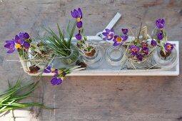 Lila Krokusse in Glasfläschchen und Holzschale auf rustikaler Holzplatte