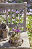 Rustikale Gartenbank mit Krokussen unter Draht-Haube