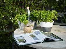 Open book, yarn and potted herbs on garden table
