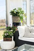 Arrangement of flowering plants in corner of cosy conservatory