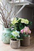 Spring arrangement of three hydrangeas and branches