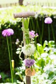 Spade handle decorated with allium flowers and sign in garden