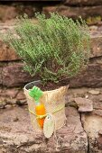 Potted herb wrapped in hessian decorated with hand-made felt carrot