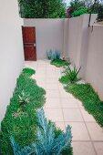Pathway through courtyard between beds of succulents