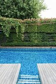 Blue tiled pool with wooden terrace in front of a green garden wall