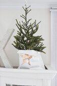 Kleiner Weihnachtsbaum in Papiertüte mit Sternmotiv