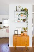 Old wooden chest of drawers below plants on wall-mounted shelves