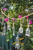 Glasflaschen mit pinkfarbenen Kosmeen und Teelichtern an rustikalem Seil aufgehängt