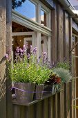 Fensterbrett mit blühendem Lavendel dekoriert