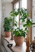 Green houseplants on live-edge wooden window sill