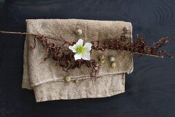 White hellebore, dried stem of flowers and snail shells on hessian