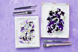 Violas in white picture frames and paintbrushes