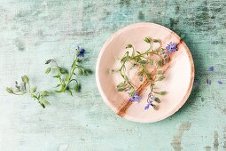 Edible borage flowers on plate (top view)