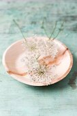 Edible wild carrot flowers on plate