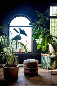 Large houseplants in decorative pots in front of arched window