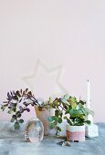 Arrangement of succulents in ceramic pots, candles and star decoration
